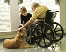 pet therapy 2